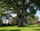 leon tree
