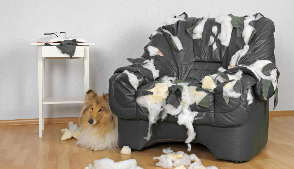 How To Keep The Pets Off The Furniture