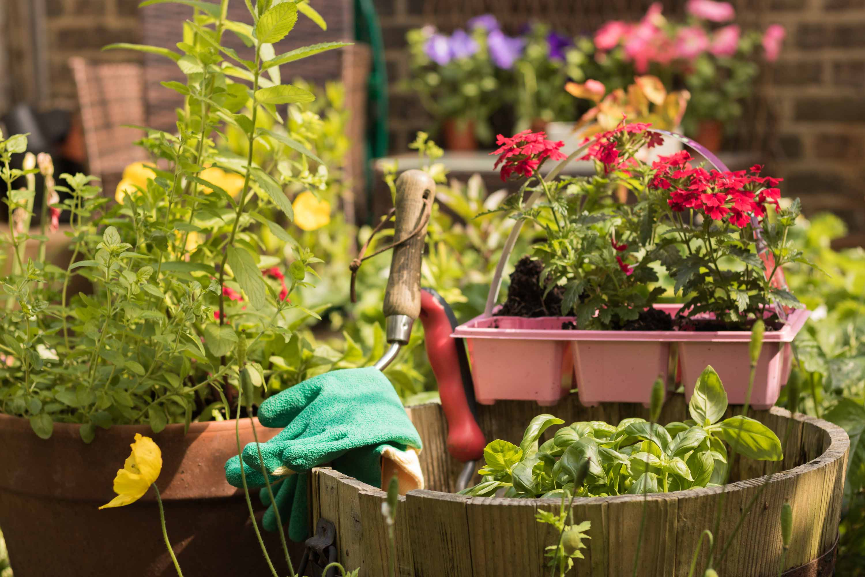 Using Native Plants In A Home Garden Can Reduce Maintenance And The Need  For Frequent Watering. Local Gardeners Can Learn More About The Topic From  Sue ...
